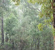 Gumtrees in the Pouring Rain by metriognome