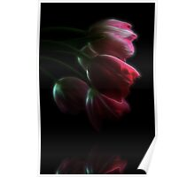 Tulips Reflected Poster