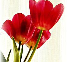 ~ Glorious Spring ~ by Brenda Boisvert