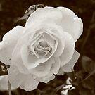 Morning Flowers  by Sparc_ eg
