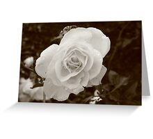 Morning Flowers  Greeting Card
