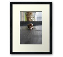 Snail Wall Framed Print