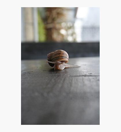 Snail Wall Photographic Print