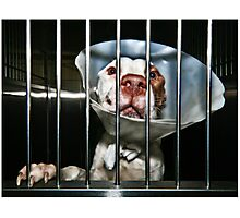 Shelter Dogs #17 Photographic Print