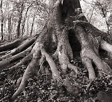 Rooted by jimHphoto