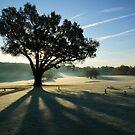 Turkey Oak in Autumn by John Gaffen