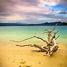 Lake Jocassee Drifter - Driftwood On Beach by Dave Allen
