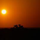 Red sun by Anitavr