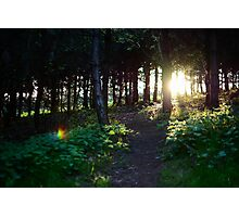 Sun down through the woods Photographic Print