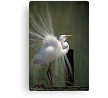 Avery Island Egrets--Great Egret in all his Regalia Canvas Print