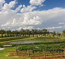 Hunter Valley Vineyard by Sylvia Wu