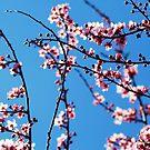 Ahh... Spring! by Tori Snow