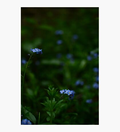 Tiny blue flowers amongst the green Photographic Print