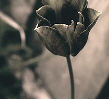 Tulip v.2 by Karina Kaiser