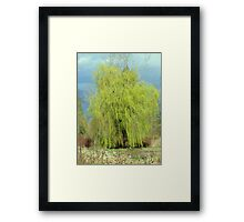 Weeping willow in the wind Framed Print