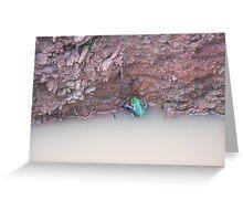 Unidentified Australian Frog Greeting Card