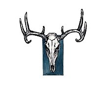 Stag Skull with Blue Photographic Print
