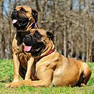 Majestic Mastiff's by Lover1969