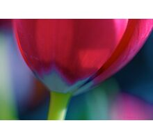 It's a colourful life Photographic Print