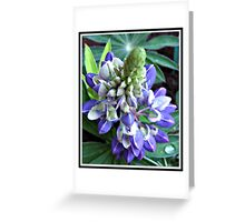 Raindrops on Baby Blue Lupin  Greeting Card