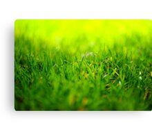shining grass Canvas Print
