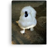 Fluffy Fowl Canvas Print