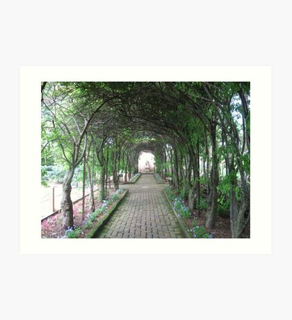 The Pleached Allee Art Print