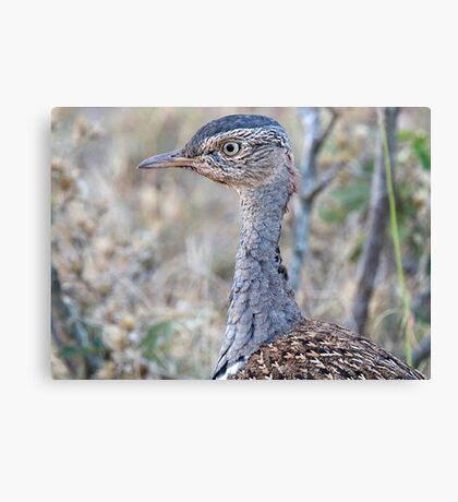 Red Crested Korhaan Close Up Canvas Print