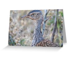 Red Crested Korhaan Close Up Greeting Card