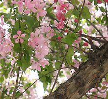 Cherry Blossom Parfait by MarianBendeth