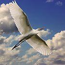 Wetland Flight by byronbackyard