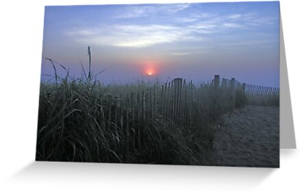 Dune Fence at Sunrise by Kissy