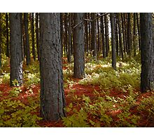 Morning Light in the Woodland Photographic Print