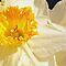 Your Favorite Spring Flower or Blossom