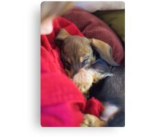 sleepy sook Canvas Print
