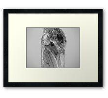 Pelican Eye Framed Print