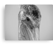 Pelican Eye Canvas Print