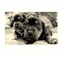 three pups Art Print