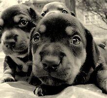 three pups by Gideon du Preez Swart