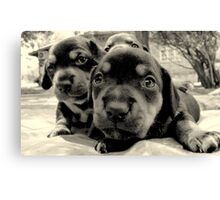 three pups Canvas Print