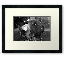 Smug Framed Print