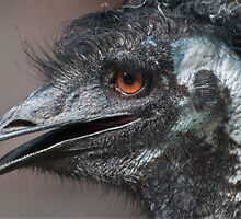 Emu II by Tom Newman