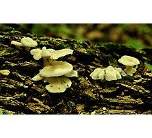 Fungus Among Us Photographic Print