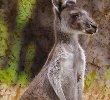 Western Grey Kangaroo by Tainia Finlay
