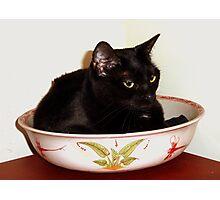 Black Cat in Bowel Photographic Print