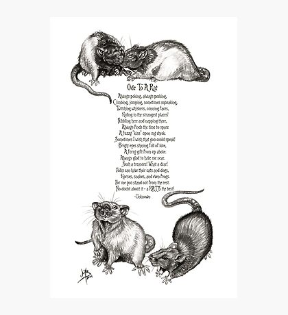 Ode To A Rat Photographic Print