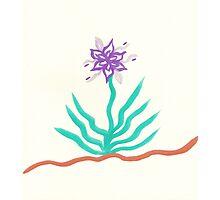 Lonely Plant Photographic Print