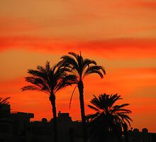 PALM TREES IN FIRE by Khaled EL Tangeer