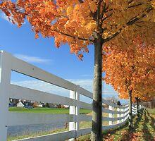 Tree Line by Nicholas  J Mast