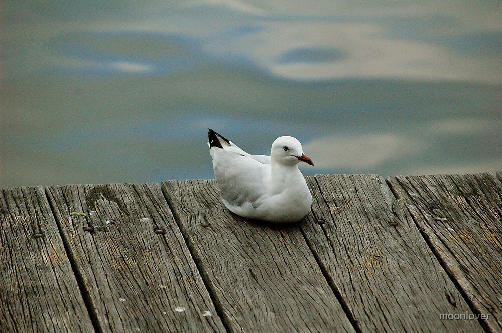 Solitary Seagull by moonlover
